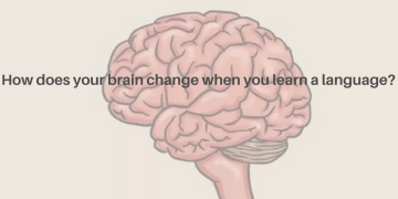 how-does-your-brain-change-when-you-learn-a-language